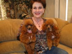 Been in busy over 45 years of breeding toy poodles