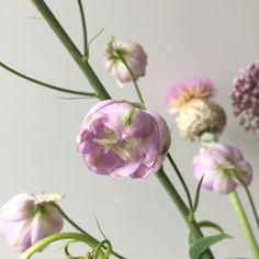 Lovely flowers | Peet likes