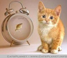 is-it-tuna-time.