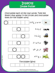 Insects - Arabic Vocab