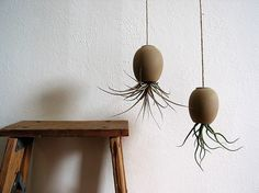 Hanging AirPlant Pod  Natural Moroccan Sand by mudpuppy  I heart Mudpuppy. Denver based!