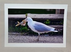 Seagull greeting cardfunny greeting by EyeLuvPhotography on Etsy