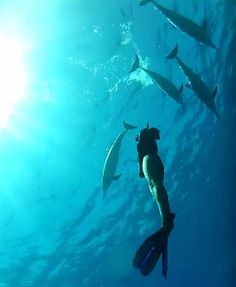 swimming with dolphins in Hawaii. Hawaii tour, hawaii snorkeling tour. Oahu things to do in waikiki