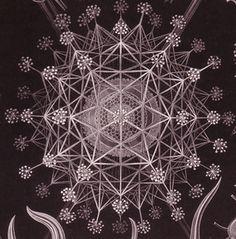 Pitcher Plant and Amoebas 1990 Ernst Haeckel Art Forms in Nature Litho Ernst Haeckel Art, North Rhine Westphalia, Sibylla Merian, Natural Form Art, Sacred Geometry Art, Life Form, Patterns In Nature, Science Art, Geometric Art