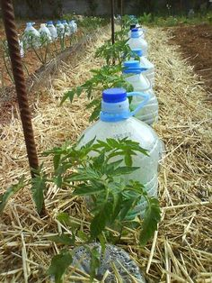 Det här är ett smart sätt för att vattna era växter utan att slösa för mycket vatten