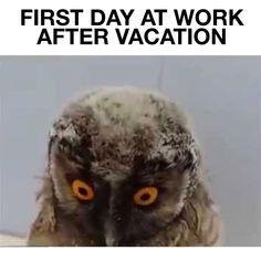 15 Bästa Bilderna På Back To Work After Vacation Work Humor