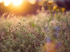 Wiese by ~janne on Flickr.