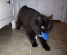 Mog in action!  Rescued by the Greater Victoria Animal Crusaders in 2011