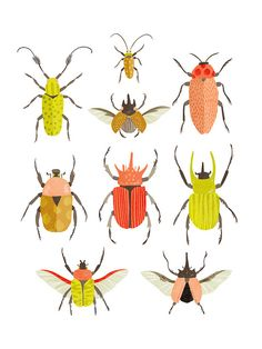 Art print - Beetle identification chart
