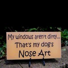 This is so my windows at home LOL...3 crazy dogs and LOTS of nose art!