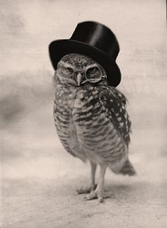 mr owl + mr peanut