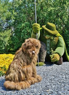 Sheepdog topiary made from Carex 'Toffee Twist'