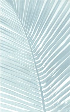 candystorecollective.com >> Blue palm frond.