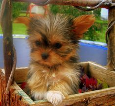 This is adorable, especially because its a cute tiny dog in a basket.