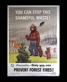 "Smokey the Bear.I think I was in a ""fan"" club. I have a bookmark and a coloring book. I entered a coloring contest in Camp Fire Girls and won with a Smokey picture which was displayed in the window of our local store! Vintage Advertising Posters, Old Advertisements, Vintage Ads, Retro Posters, Vintage Signs, Smokey The Bears, Nature Posters, Forest Service, California Love"
