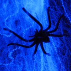 Halloween Schwarzlicht Party How To #blacklight #schwarzlicht #schwarzlicht.de #howto #halloween #deco