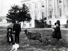 President Benjamin Harrison gave his grandchildren a pet goat named His Whiskers.