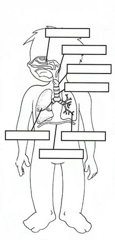 Respiratory System Worksheets | RESPIRATORY, DIGESTIVE & CIRCULATORY BODY SYSTEMS | learningenglish ...