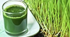 28 Benefits of Wheatgrass You Never Knew http://www.healthdigezt.com/28-benefits-of-wheatgrass-you-never-knew/  Get your wheat grass here: http://amzn.to/1Gw0Efv