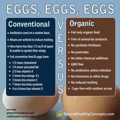 organic eggs natural food