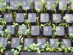 Keyboard and Cress by wetwebwork, via Flickr