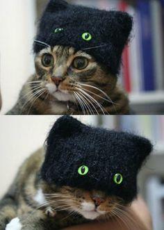 Green Eyed Cat Beanie
