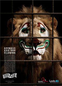 """""""DONT BE PART OF THE SHOW""""      Esta Publicidad Impresa realizada por la Liga Portuguesa a favor de los derechos de los Animales, busca mostrar a las personas que """"Los Animales no son payasos"""" y deben ser respetados."""