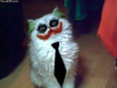 Best cat Halloween costume ever.