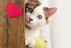Valentine's Day Treats for Cats | petMD