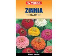 Yates Lilliput Zinnia