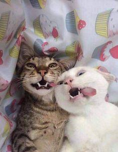 Goofy cats!! Lol