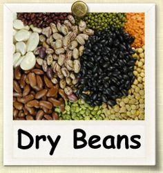 How to Grow Dry Beans | Guide to Growing Dry Beans