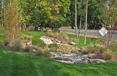 Examples of rain gardens and other drainage solutions by Sisson Landscapes- Great Falls, VA design-build landscape contractor. Bog Garden, Garden Types, Dream Garden, Lawn And Garden, Garden Water, Landscape Plans, Landscape Design, Drainage Ditch, Yard Drainage