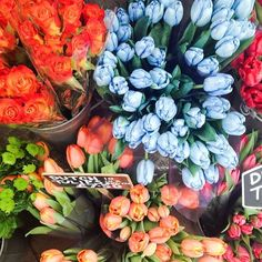 colorful bouquets of roses, tulips, . May Flowers, Fresh Flowers, Wild Flowers, Beautiful Flowers, Purple Flowers, Exotic Flowers, Ranunculus Flowers, Beautiful Bouquets, Spring Flowers