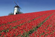 Keukenhof Park. Lisse. Netherlands