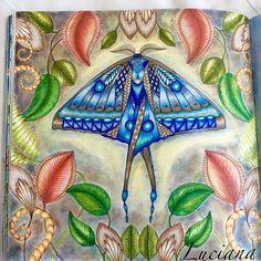 Millie Marotta's Lost Ocean - Moon Moth