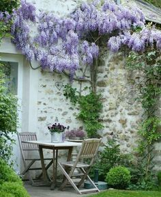 MAKE A PLACE IN YOUR GARDEN FOR MORNING COFFEE & AFTERNOON TEAS.