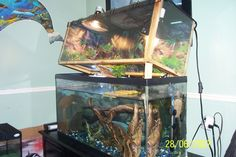 Tank Setup (above basking) - Indoor Setups.Aquariums and Tubs - Turtle Times Forums