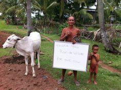 Voor € 325,- voor een koe helpt u de meest arme gezinnen in Cambodja aan een beter bestaan. http://www.hopefulchildrencenter.org/nl/doneren-nl/donatiepakketten/product/view/1/2