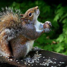 It's raining nuts?!!