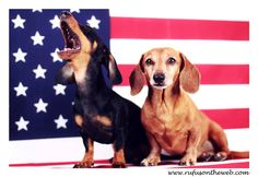Election is complete and we move forward as a nation.  http://wp.me/p27Fw1-zs #dachshund #doxies #America