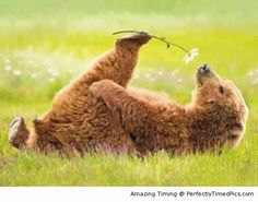 Take time to smell the flower – Even bears like the smell of spring in the flowers. | Perfectly Timed Pics