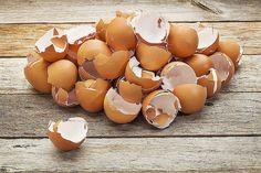 ЯИЧНАЯ СКОРЛУПА – ЦЕННЕЙШЕЕ УДОБРЕНИЕ Сохрани, чтобы не потерять!  Сколько весит скорлупа от одного яйца? Примерно 10 граммов. Прикиньте, сколько ваша семья съедает яиц в год, и поймете, что счет идет на килограммы скорлупы. Килограммы ценнейшего натурального удобрения, выбрасываемого на помойку. Яичная скорлупа в основе своей является замечательным удобрением и легко усваиваемым карбонатом кальция, дополненным набором важных для растений микроэлементов: калий, кремний, магний, фосфор и еще…