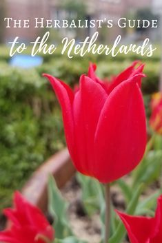 The Herbalist's Guide to the Netherlands | The Witch of Lupine Hollow