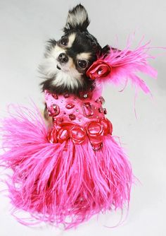 Roaring Pink Jazz Harness Dog Dress by KOCouture on Etsy