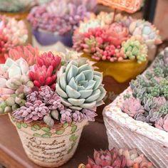Succulent Arrangements, Cacti And Succulents, Planting Succulents, Cactus Plants, Planting Flowers, Succulent Landscaping, Succulent Gardening, Succulent Terrarium, Cactus Flower