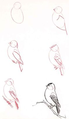 How to Draw Birds..