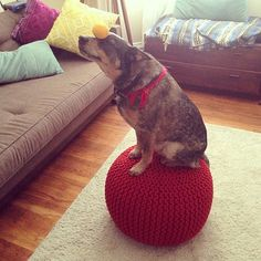 Balancing a ball on your nose while balancing yourself on another ball.