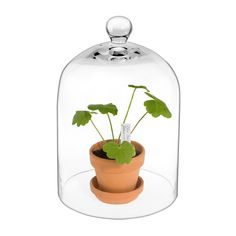Glass shield for growing plants