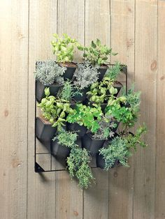 Vertical Wall Garden - contemporary - outdoor planters - - by Gardener's Supply Company
